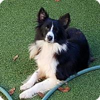 Adopt A Pet :: Nori-Martinsville - Highland, IL