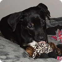 Adopt A Pet :: Max - mooresville, IN
