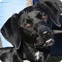 Adopt A Pet :: Hunter - Huntley, IL