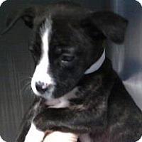 Adopt A Pet :: Android - Columbiana, AL