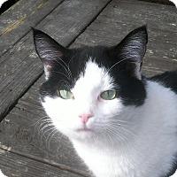 Adopt A Pet :: Thor (Courtesy Listing) - Richmond, VA