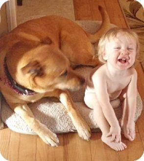 Husky/Labrador Retriever Mix Dog for adoption in Alliance, Ohio - Telly - Neutered