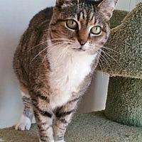 Adopt A Pet :: Lexi - Asheville, NC