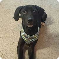 Adopt A Pet :: Wally - Louisville, KY
