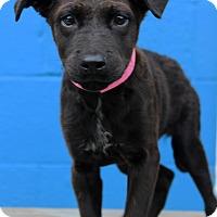 Adopt A Pet :: Ursula - Waldorf, MD