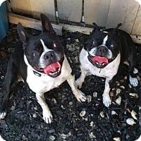 Adopt A Pet :: Mello & Murphy - Huntington Beach, CA