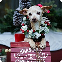 Adopt A Pet :: Lady - Auburn, CA
