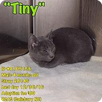 Adopt A Pet :: Tiny - Salisbury, NC