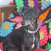 Adopt A Pet :: MoneyPenny - lavon, TX