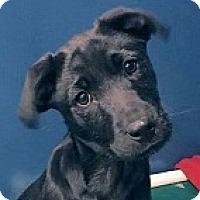 Adopt A Pet :: Eddie - Springdale, AR