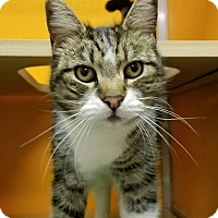 Adopt A Pet :: Khloe Katdashian - Elyria, OH