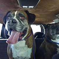 Adopt A Pet :: Carl Fredricksen - Austin, TX
