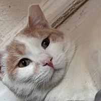 Adopt A Pet :: Tanner - St. Louis, MO
