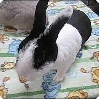 Adopt A Pet :: Oreo - Williston, FL