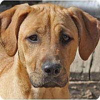 Adopt A Pet :: Sophia - Pending! - kennebunkport, ME