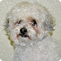 Adopt A Pet :: Katie - Port Washington, NY