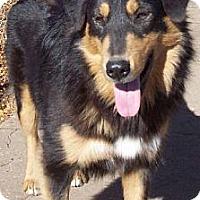 Adopt A Pet :: LENA - Minnetonka, MN