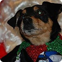 Adopt A Pet :: Ralph - Ogden, UT