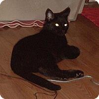 Adopt A Pet :: Josie - Laguna Woods, CA