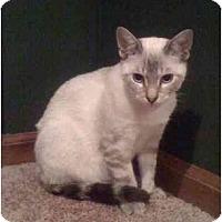 Adopt A Pet :: Brody (PO) - Little Falls, NJ