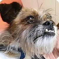 Adopt A Pet :: Buster - Vista, CA