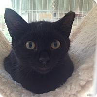 Adopt A Pet :: Cole - San Rafael, CA