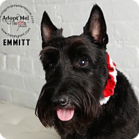 Adopt A Pet :: Emmitt-Pending Adoption - Omaha, NE