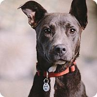 Adopt A Pet :: Aine - Portland, OR