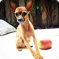 Adopt A Pet :: Mouse - Pierrefonds, QC
