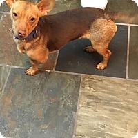 Adopt A Pet :: Noel - Lodi, CA