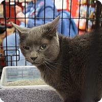 Adopt A Pet :: Freddie - Washington, PA