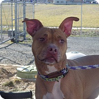 Adopt A Pet :: Paige - Queenstown, MD