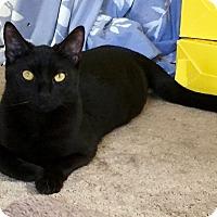 Adopt A Pet :: Chip - Novato, CA