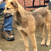 Adopt A Pet :: Josie - Bedminster, NJ
