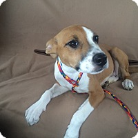Adopt A Pet :: Bella formerly Shimmer - Las Vegas, NV