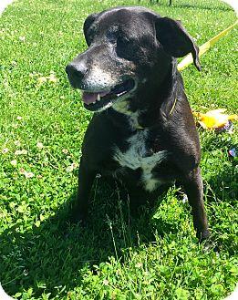 Labrador Retriever Mix Dog for adoption in Gallatin, Tennessee - Jasmine