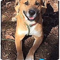 Adopt A Pet :: Buster (Reduced Adoption Fee) - Spring Valley, NY