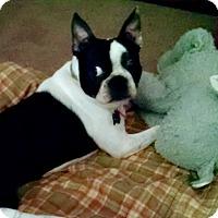 Adopt A Pet :: Roscoe - Minnetonka, MN