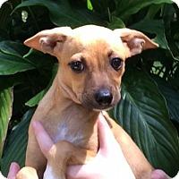 Adopt A Pet :: Maddie - Bradenton, FL