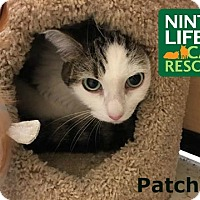 Adopt A Pet :: Patches - Oakville, ON