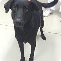 Adopt A Pet :: Shadow - Decatur, AL