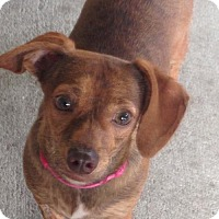 Adopt A Pet :: BETSY (WB KSW) - Tampa, FL