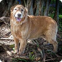 Adopt A Pet :: Sonia 718 - Naples, FL