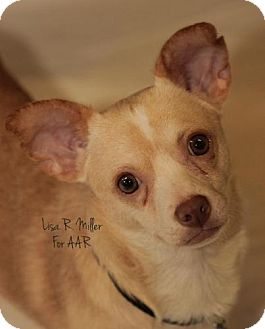 Chihuahua Dog for adoption in Freeport, Florida - Charleston