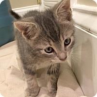 Adopt A Pet :: Bumper - Devon, PA