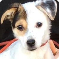 Adopt A Pet :: SKEETER (video) - Los Angeles, CA
