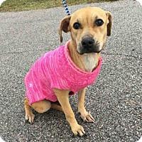 Adopt A Pet :: DAISY - Rosenberg, TX