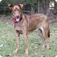Adopt A Pet :: MAYA - Tomball, TX