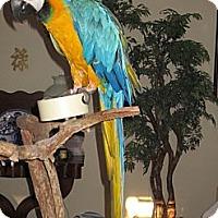 Adopt A Pet :: Arbor - Punta Gorda, FL