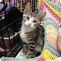 Adopt A Pet :: Tina - Fort Lauderdale, FL